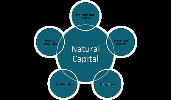natural_capital