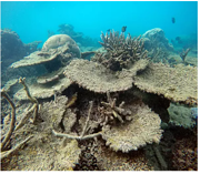 Coral reef - IPCC - web featured