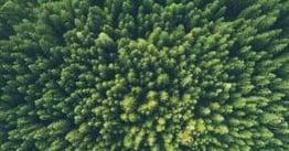 trees_web_blog
